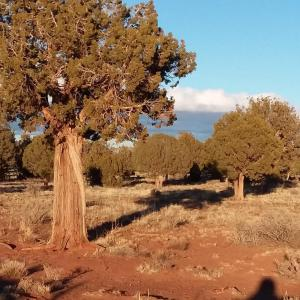 Lot 589 Ranch of the White Mountains, CR 5020/ N8562