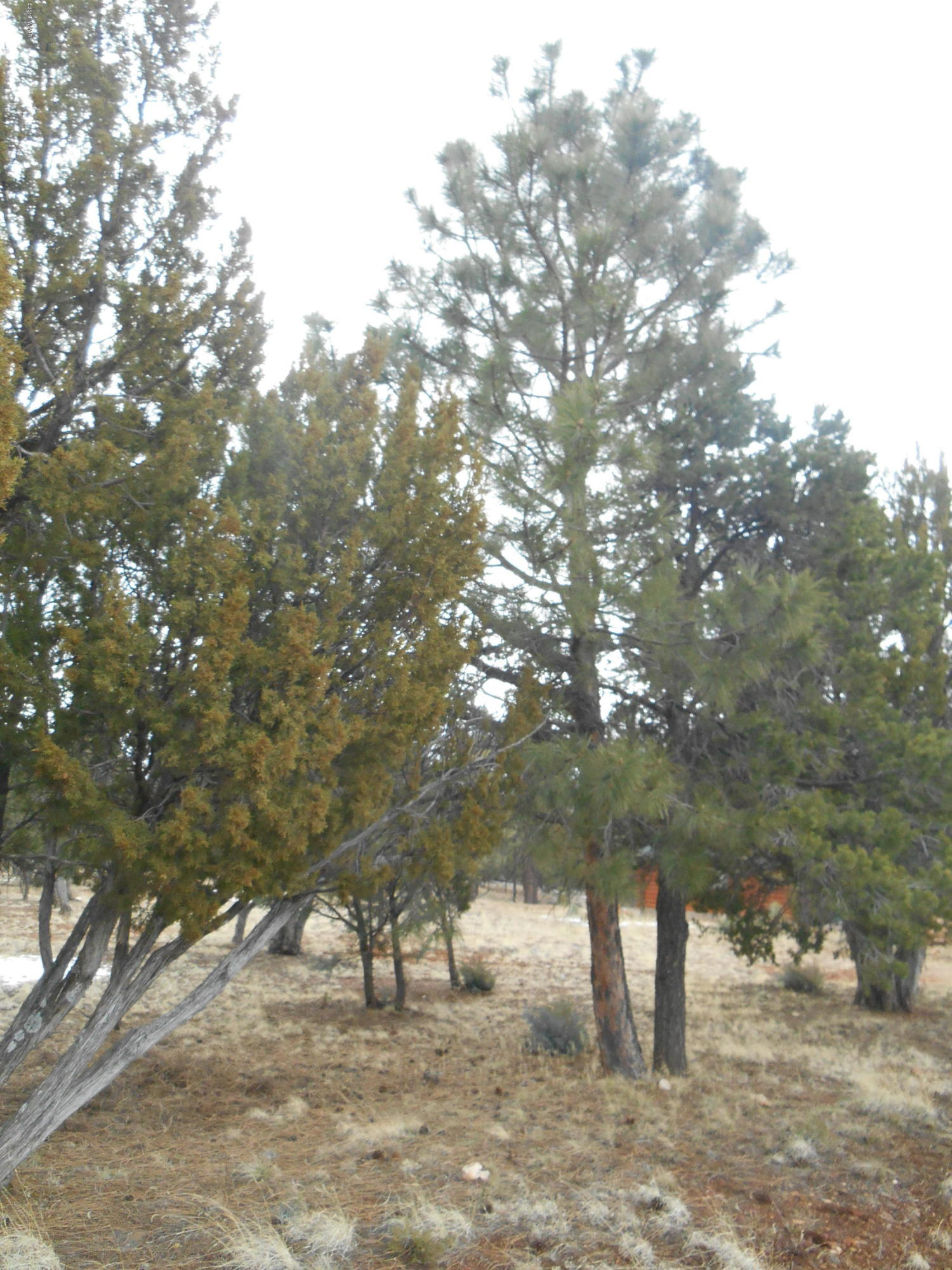 This level land parcel is ready for you to build on, septic is already in , nicely treed and backs US Forest Service.  Mogollon Estates has paved roads, underground utilities, custom site built homes only. HOA is only $95.00 annually. Close to restaurants, and shopping