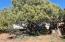 8489 Javelina Drive, Show Low, AZ 85901