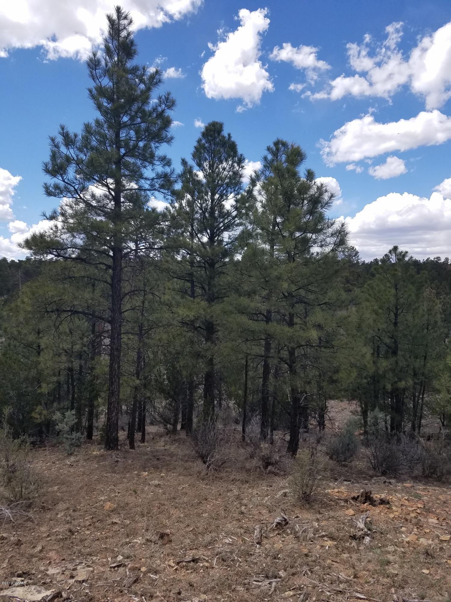 Bordering National Forest with power and water!!  Rare find with lots of big trees and easy access only one mile off Hwy 260 in Heber. Several wonderful building sites/can be divided.  Ride the horses or quads for miles or just enjoy the privacy.  Buyer to verify the water with Heber Water and electric with Navapache.  Call listing agent for more information.  Private road maintenance agreement of around $200.00 per year for Hill Rd.