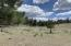 00 TBD 10 ACRES CR 2315, Nutrioso, AZ 85932