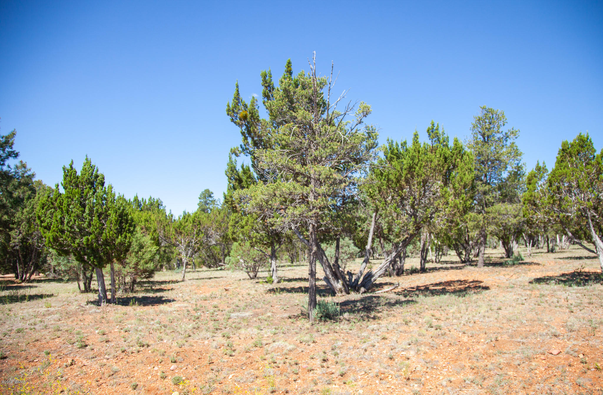 Looking for land to build a custom home? This 1.1-acre parcel located in Mogollon Estates w/ power and water. Ready to build, level lot, mix trees, in a cul-de-sac. Come enjoy all the community offers.  Hurry, Call today!