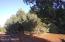 2917 Constellation Lane, Overgaard, AZ 85933