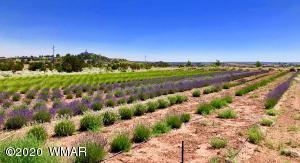 Lavender Field (Looking NE)