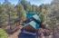 3417 Roaring Fork Drive, Pinetop, AZ 85935
