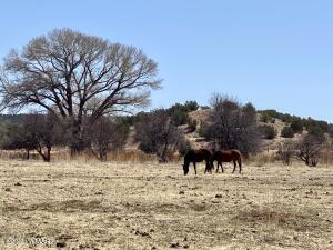 7641 Blackies Road, Taylor, AZ 85939