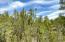 2333 Elk Ridge Lane, Overgaard, AZ 85933