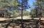 3417 Roaring Fork, Pinetop, AZ 85935