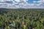 tall pine trees all around